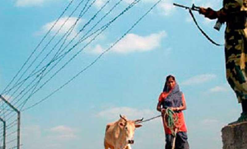 সীমান্তে গরু হয়ে যায় বাছুর! ঘুষ কেলেংকারিতে বিএসএফ