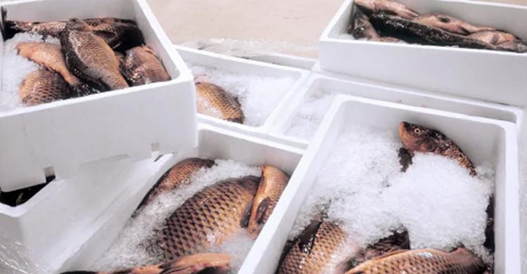 ভারতীয় প্রতিষ্ঠান থেকে মাছ আমদানি নিষিদ্ধ :চীন
